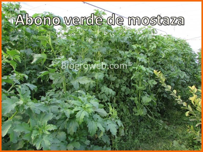 Definici n y ventajas de los abonos verdes for Rotacion cultivos agricultura ecologica